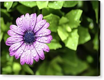 Purple Flower On Green Canvas Print