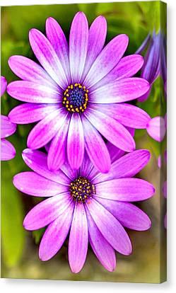 Centre Canvas Print - Purple Flowers by Az Jackson
