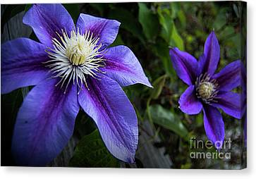Purple Flowers Canvas Print by Brian Jones