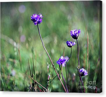Canvas Print featuring the photograph Purple Flowers by Jim and Emily Bush