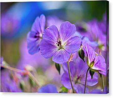 Purple Flowers Canvas Print by Rae Tucker