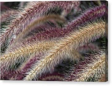 Purple Fountain Grass Sunken Garden Centennial Park Canvas Print