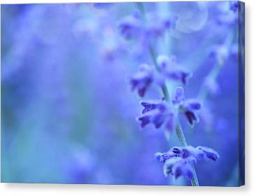 Canvas Print featuring the photograph Purple Garden by Douglas MooreZart