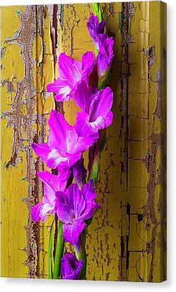 Purple Glad Canvas Print by Garry Gay