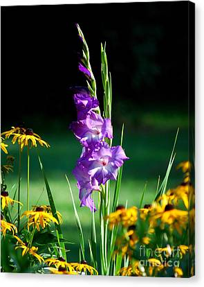 Canvas Print featuring the photograph Purple Glads And Black-eyed Susans by Lila Fisher-Wenzel