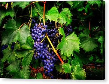 Grapes Canvas Print by Greg Mimbs