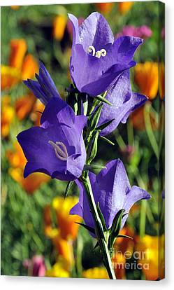 Purple Harebell Flowers Canvas Print by Gary Whitton