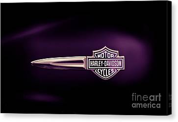 Purple Haze Canvas Print by Tim Gainey