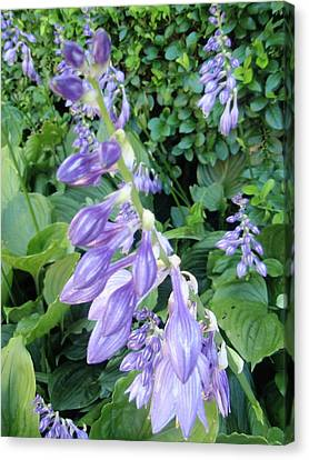 Canvas Print featuring the photograph Purple Hosta Flowers by Beth Akerman