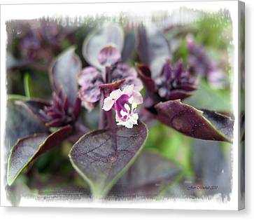 Canvas Print featuring the photograph Purple In Autumn by Joan  Minchak