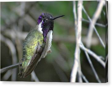 Canvas Print featuring the photograph Purple Iridescence 2 by Fraida Gutovich
