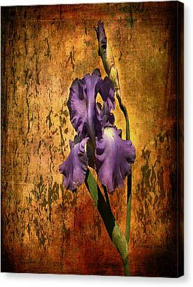 Purple Iris At Sunset Canvas Print by Bellesouth Studio