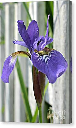Purple Iris At The Fence Canvas Print by Lila Fisher-Wenzel