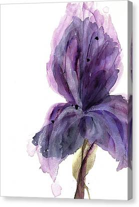 Purple Iris Canvas Print by Dawn Derman