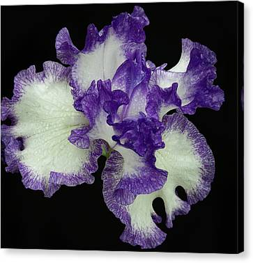 Canvas Print featuring the photograph Purple Iris Frills by Jean Noren