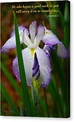 Purple Iris In Morning Dew Canvas Print