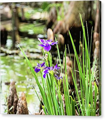 Purple Iris Canvas Print by Scott Pellegrin