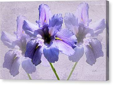 Purple Irises Canvas Print by Rosalie Scanlon