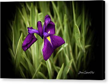 Canvas Print featuring the photograph Purple Japanese Iris by Joann Copeland-Paul