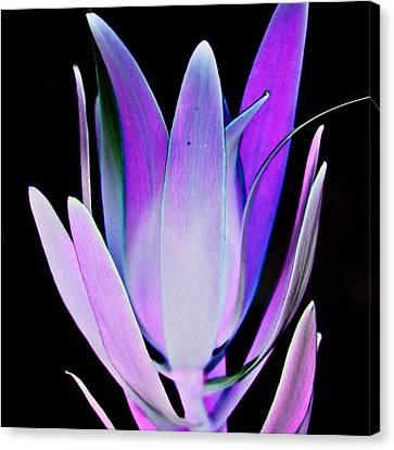Canvas Print featuring the photograph Purple by John Hansen