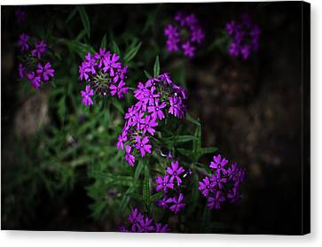 Purple Kiss Canvas Print by Swift Family