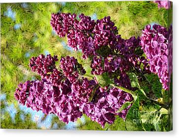 Purple Lilac 1 Canvas Print by Jean Bernard Roussilhe