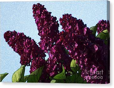 Purple Lilac 3 Canvas Print by Jean Bernard Roussilhe