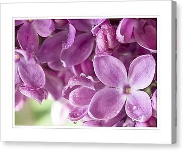 Purple Lilac Greeting Card Canvas Print by Mariola Szeliga