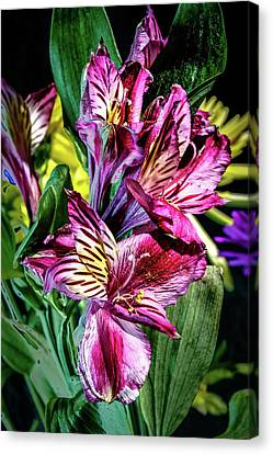 Purple Lily Canvas Print by Mark Dunton