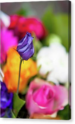 Purple Lisianthus In Colorful Bunch Canvas Print