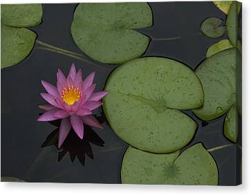 Canvas Print featuring the photograph Purple Lotus by Lisa Missenda
