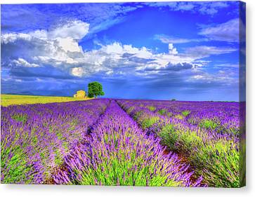 Old Houses Canvas Print - Purple by Midori Chan