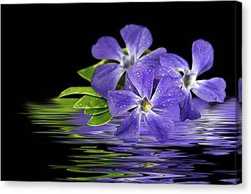 Purple Myrtle Reflection Canvas Print