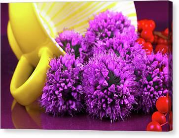 Berry Canvas Print - Purple Onion Flower Macro by Tom Mc Nemar