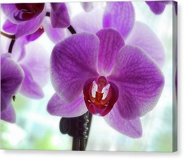 Canvas Print - Purple Orchid by Ann Powell