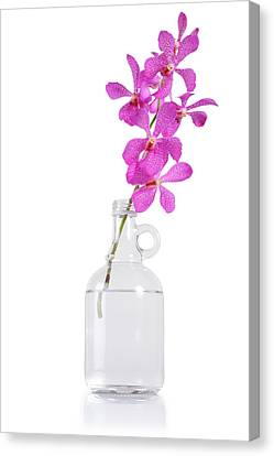 Purple Orchid Bunch Canvas Print by Atiketta Sangasaeng