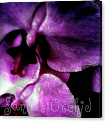 Purple Orchid Canvas Print by Fania Simon