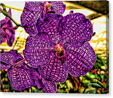 Canvas Print featuring the photograph Purple Orchid by Paul Cutright