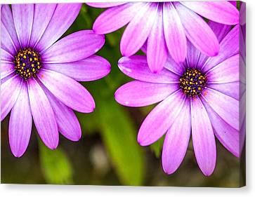 Purple Petals Canvas Print by Az Jackson