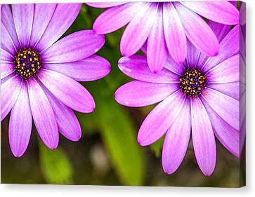 Centre Canvas Print - Purple Petals by Az Jackson