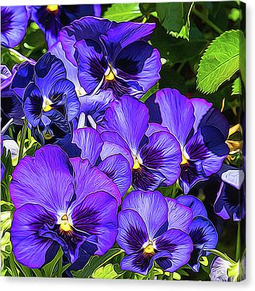 Purple Pansies In Morning Light Canvas Print