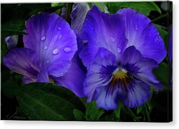 Purple Pansies Canvas Print by Mikki Cucuzzo
