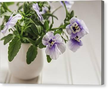Canvas Print - Purple Pansy Flowers by Kim Hojnacki