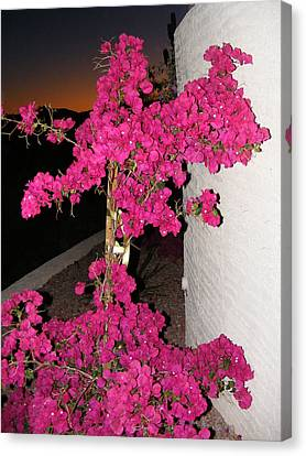 Purple Passion Against Desert Sunset Canvas Print