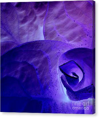 Canvas Print featuring the photograph Purple Passion by Erica Hanel
