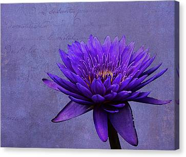 Canvas Print featuring the photograph Purple Passion by Judy Vincent