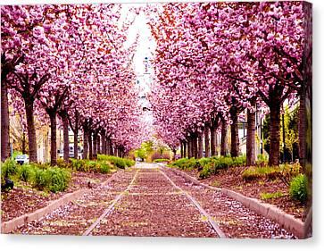 Purple Path Canvas Print
