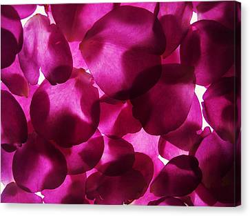 Purple Petals II Canvas Print