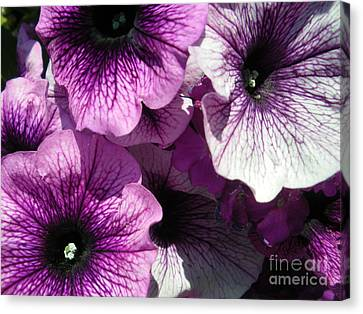 Purple Petunia Paradise Canvas Print by Sonya Chalmers