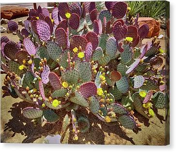 Purple Prickly Pear Cactus Canvas Print